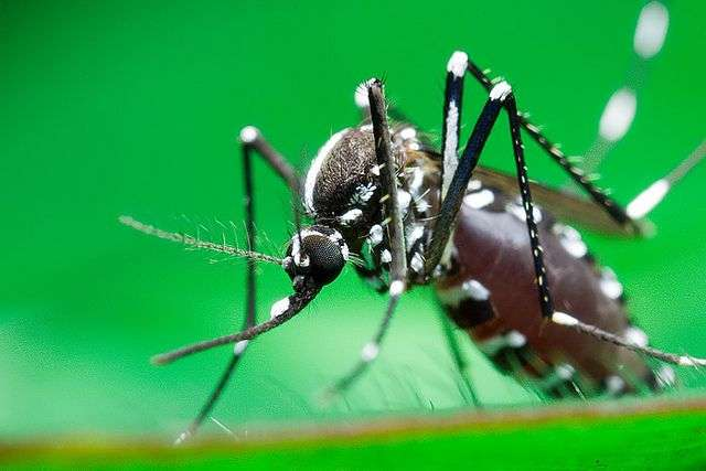 Zika Virus in local mosquitos