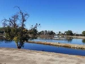 Birds Mission Hills Water Relocation center